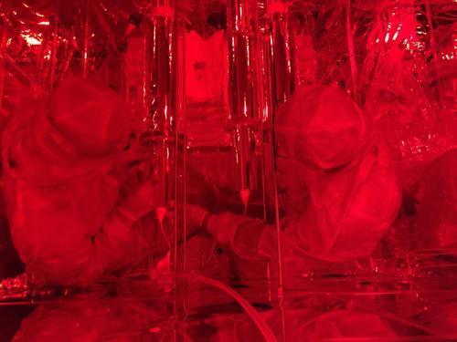 Crystal installation. Image courtesy of COSINE-100 collaboration.