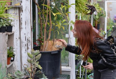 """Visiting """"Squeaky"""", the resident cat at the Edgerton Park public greenhouse, New Haven. Photo by Ethan Bernard."""