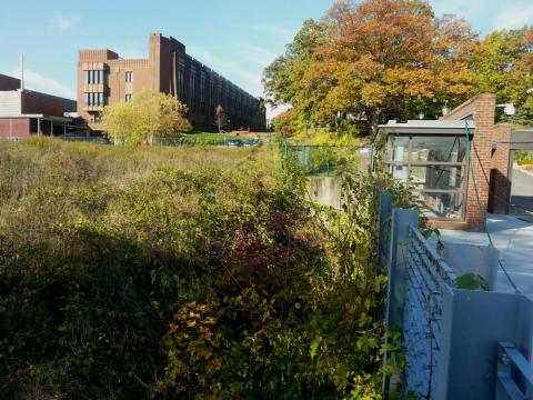 """The """"urban meadow"""" behind Wright Lab, taken last fall. Photo by P. Farnsworth."""