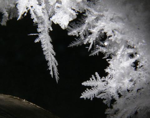 Ice crystals growing on the rim of a dewar containing liquid nitrogen. Photo by Ethan Bernard.