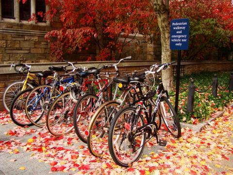 Third Place - Bikes on central campus (photo by Anna Kashkanova)