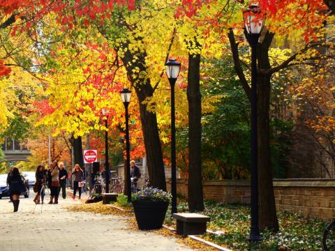 Central campus in the fall (photo by Anna Kashkanova)