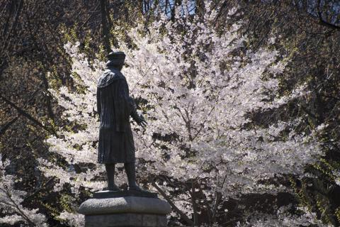 A bronze statue of Christopher Columbus faces one of many blossoming Japanese cherry trees in Wooster Square, inspiring adventure and exploration. Photo by Jennifer Stergiou