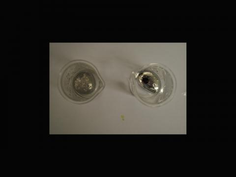 Ian Billinge. We can see the difference between suspending pristine iron particles, the right hand sample, and iron particles soaked in hydrochloric acid, the left hand sample, in gallium-indium alloy. The non-soaking sample has a beautiful luster and a mirrorlike surface, while the soaking sample is appears dull and grainy.