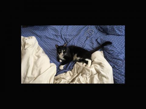 Samuel Bryant. Keith the cat.