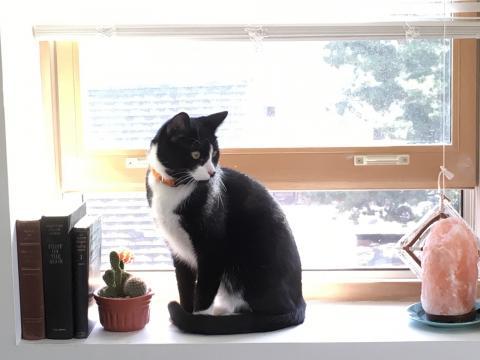 Samuel Bryant. George the cat