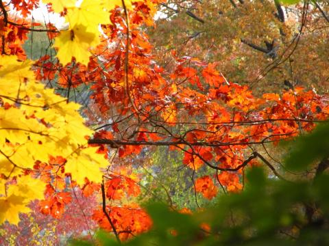 Leaves at the East Rock Park. Photo by Alexey Shkarin