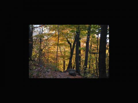 Andrew Currie. Sleeping Giant in the fall
