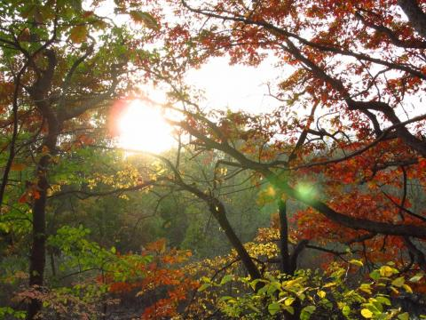 Sun and trees at the East Rock park. Photo by Alexey Shkarin