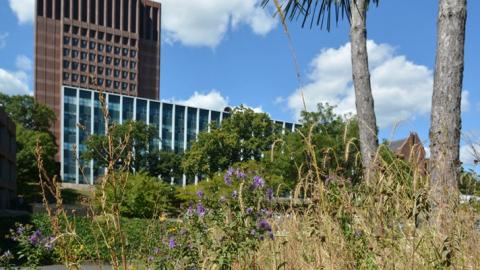 Urban Meadow (photo submitted by Laurelyn Celone)