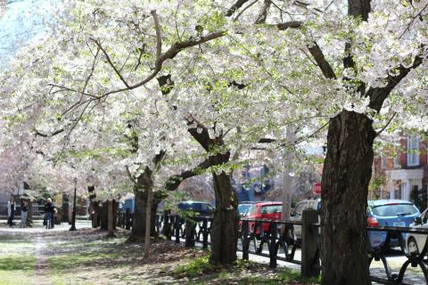 Wooster Square in Spring. Photo by Anna Kashkanova